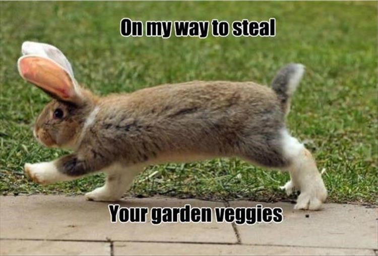 Mammal - On my way to steal Your garden veggies