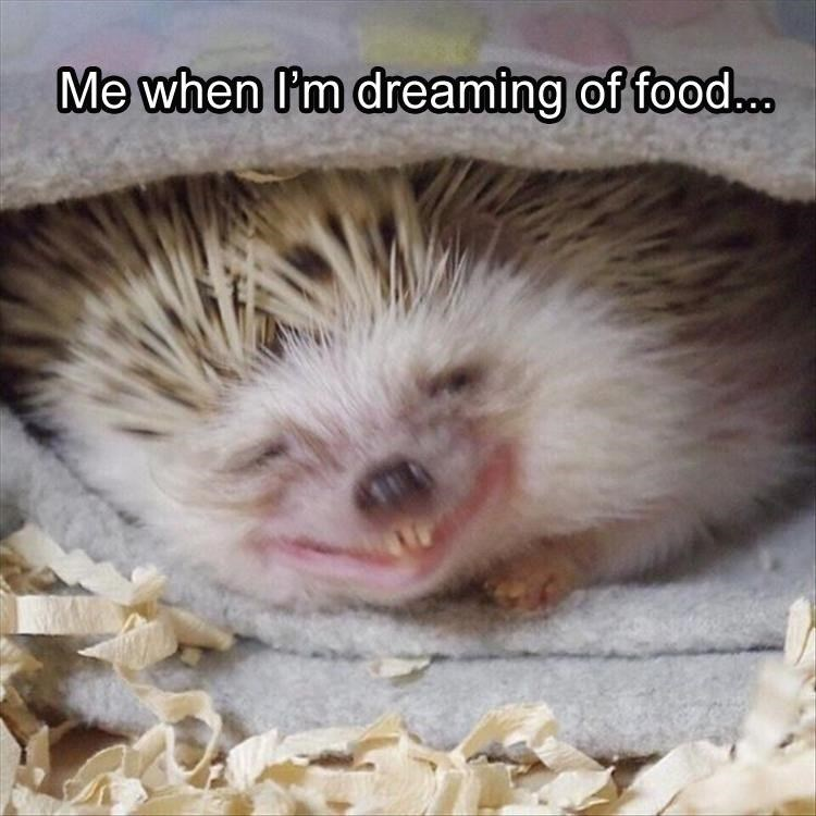 Hedgehog - Me when P'm dreaming of food..