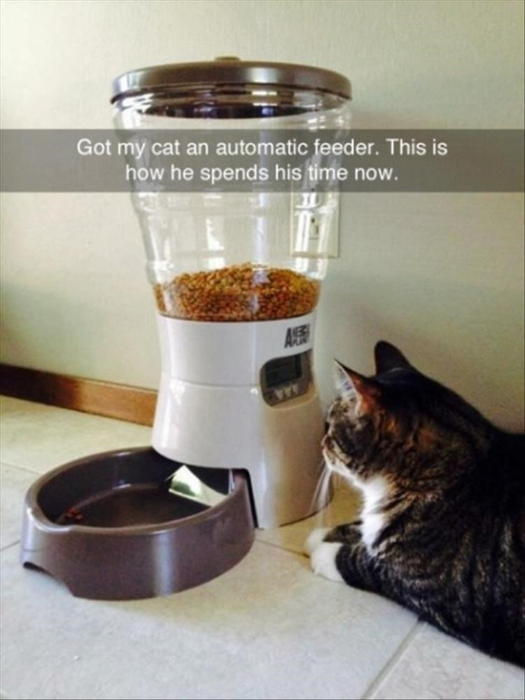 Cat - Got my cat an automatic feeder. This is how he spends his time now. AE