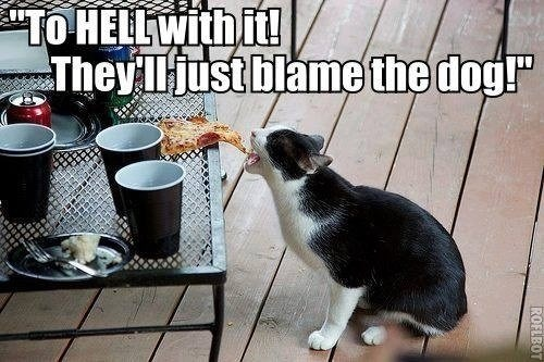 "Cat - ""TO HELLWITH it! They lliust blamethe dog ROFLBOT"
