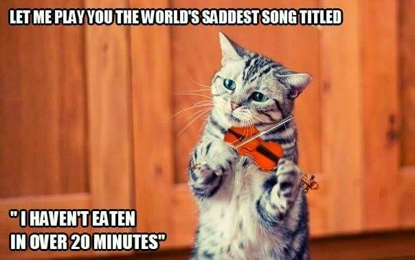 "Cat - LET ME PLAYYOUTHEWORLD'S SADDESTSONGTITLED ""IHAVENTEATEN IN OVER 20 MINUTES"""