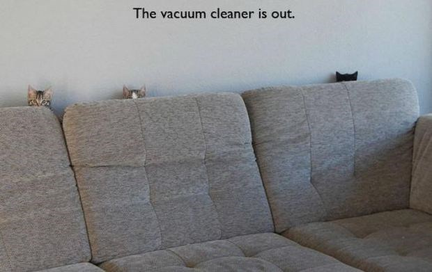 Funny cats hiding behind the couch when the vacuum cleaner is out.