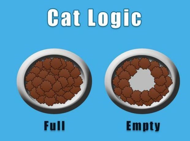 Meme about how cats only eat the food that is in the middle of the bowl, leaving the edges.