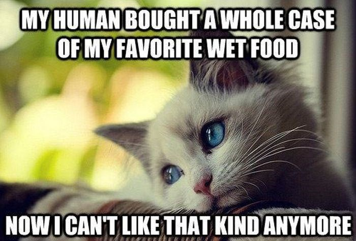 Funny cat meme about how cats don't like their favorite food after you get a whole case of it.