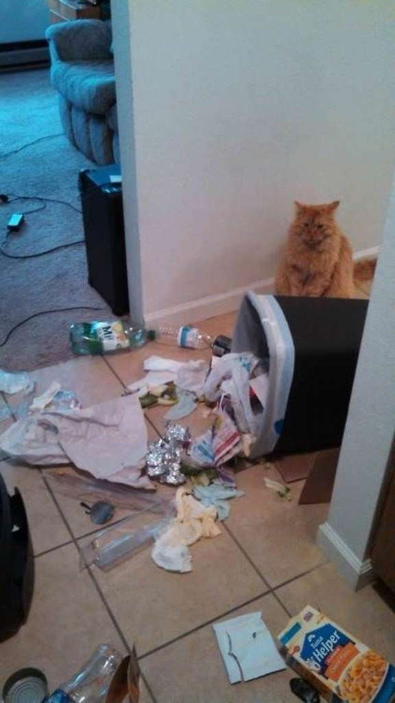 LOL cat picture of trash can that fell on its own.