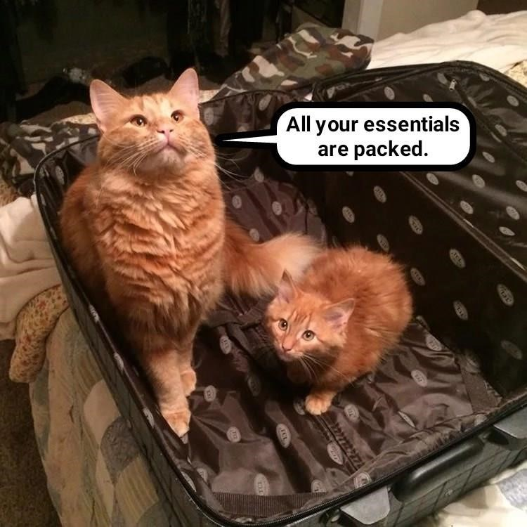 Funny cat meme about cats asking what you need to pack from the inside of an open suitcase.