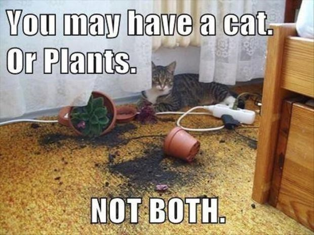 Funny cat meme of how a cat and house plants can't go together.