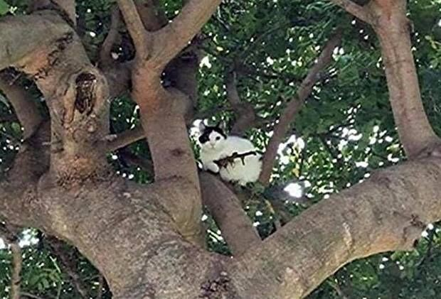 Newport Police was called to deal with a cat on tree holding a rifle