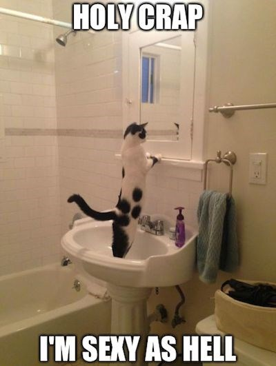 Funny meme of a cat looking in the mirror