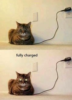 Funny meme of cat with eyes glowing to imply he is fully charged.