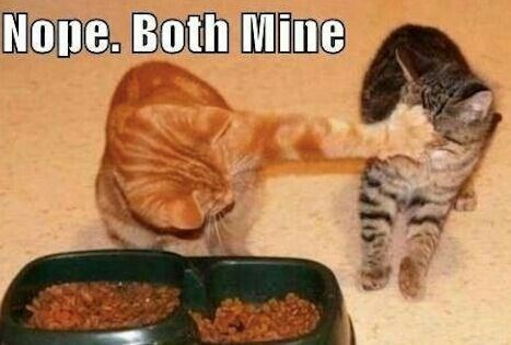 Funny picture of cats and the ginger cat wants all the food for himself.