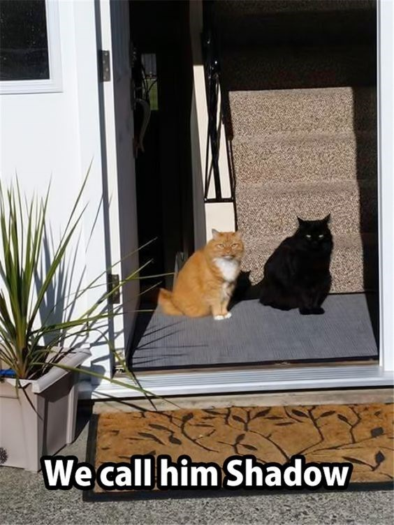 Funny picture of a black cat named Shadow who really looks like a shadow of that red haired cat.
