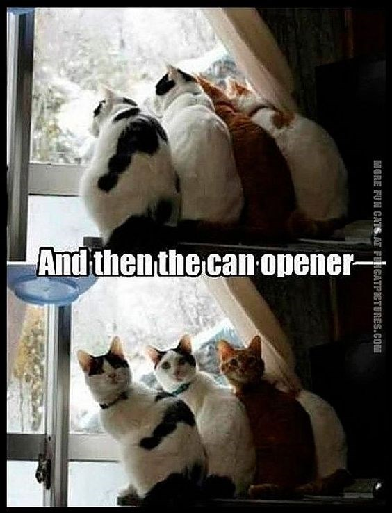Funny cat meme about when cats hear the can opener.
