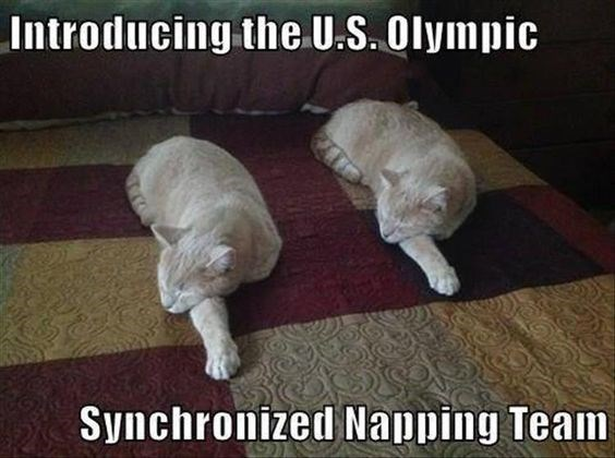 Funny picture of cats sleeping in synchronized naps.