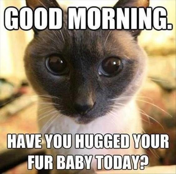Cat meme about a kitten being your fur baby.