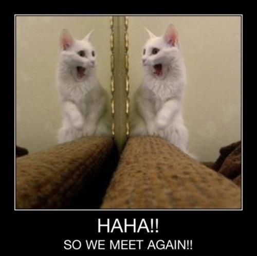 Funny meme of a cat seeing self in the mirror.