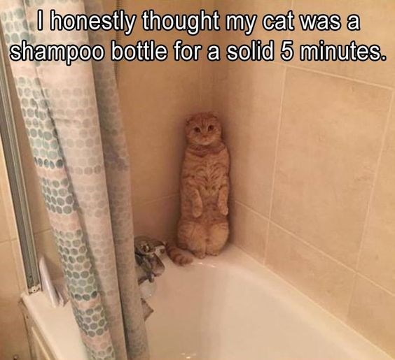 Funny meme of a cat that is camouflaged like a shampoo bottle.