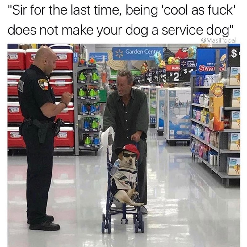 Dank meme about funny picture of am man pushing a dog in a stroller that is a 'cool as fuck' service dog.