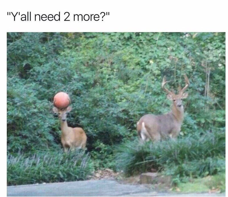Two deer on the side of the road with a basketball, asking if hypothetical basketball players need two more on the court. Funny meme about animals.