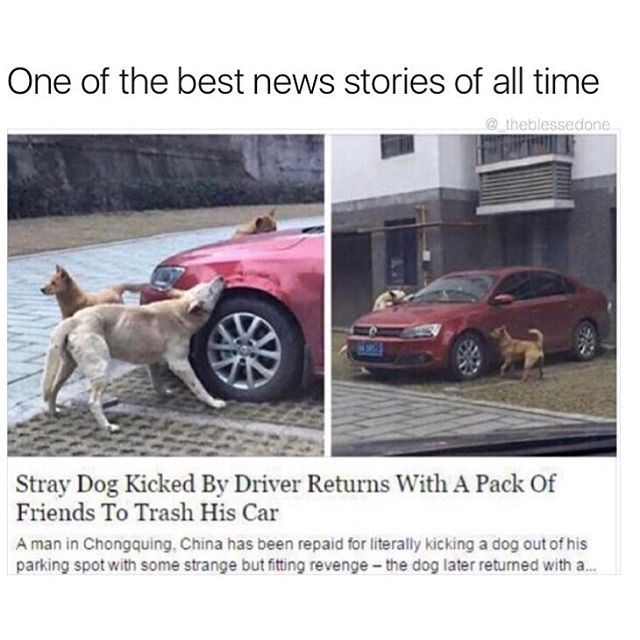 Funny meme about a news story in which a stray dog kicked by a driver gets revenge with other dogs and trashes the driver's car.