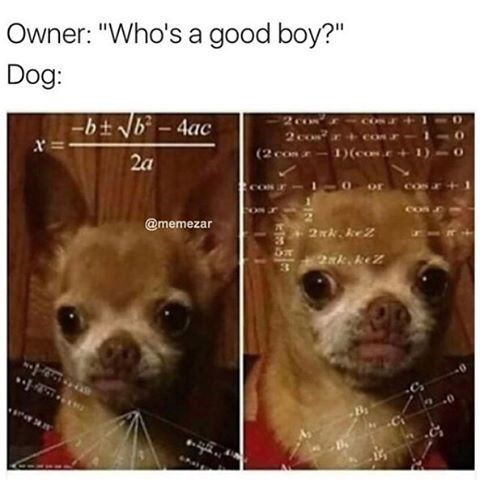 Funny meme of dog doing complex math to figure out if he is a good boy.