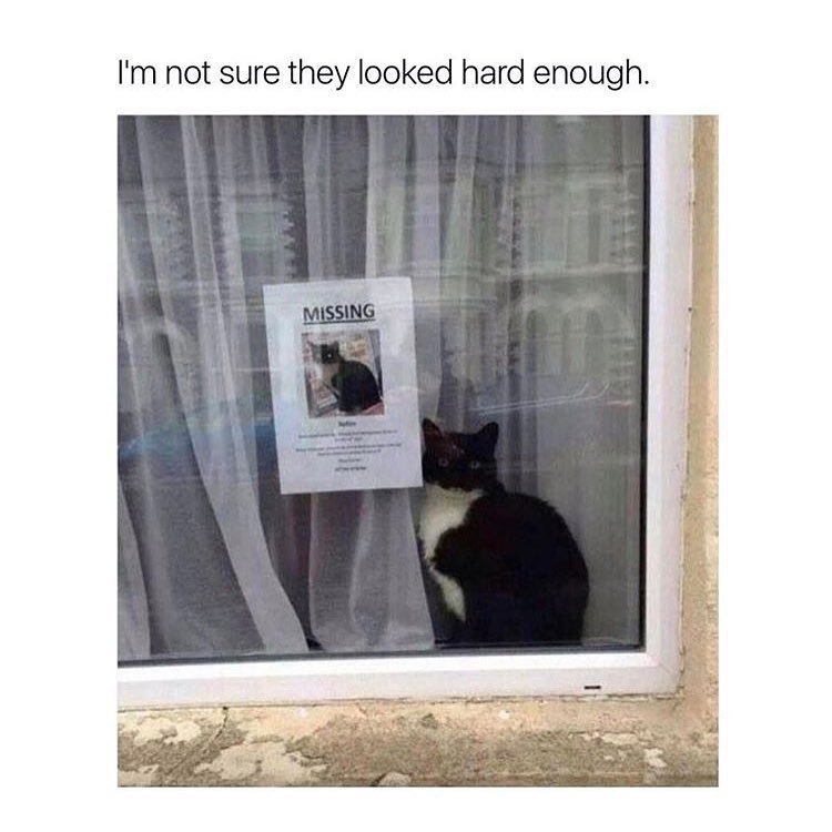 Funny meme about cat: there is a missing sign right next to the same cat in the window.