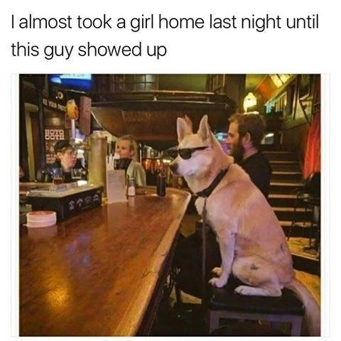 Wednesday meme about a dog stealing all the girls at the bar