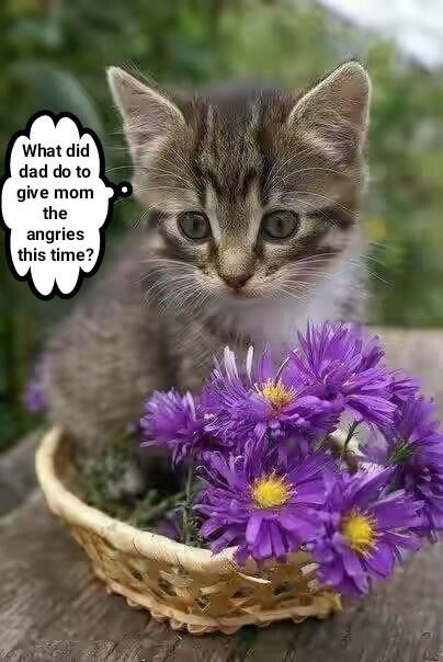 kitten Flower cat memes - 9033665792