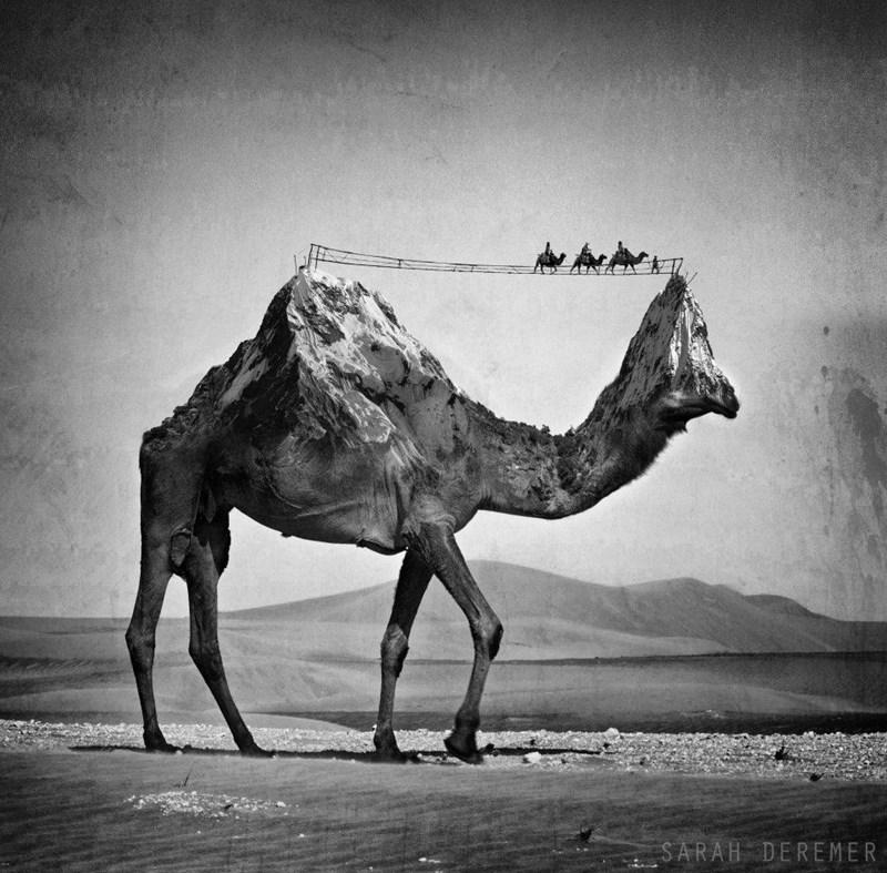 Camel - SARAH DEREMER