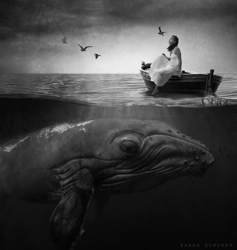 Cetacea - SARAH DEREMER