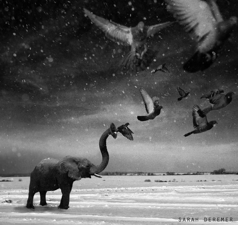 Elephant - SARAH DEREMER