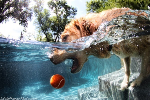 underwater pupper - Water - LittleFriends Photocom