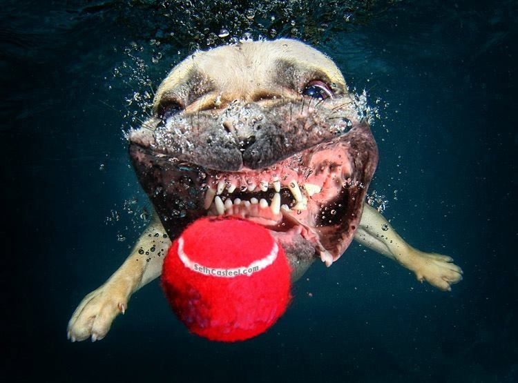 underwater pupper - Snout - eincastoel.com