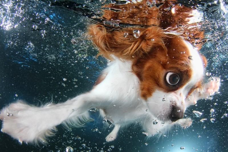underwater pupper - Canidae
