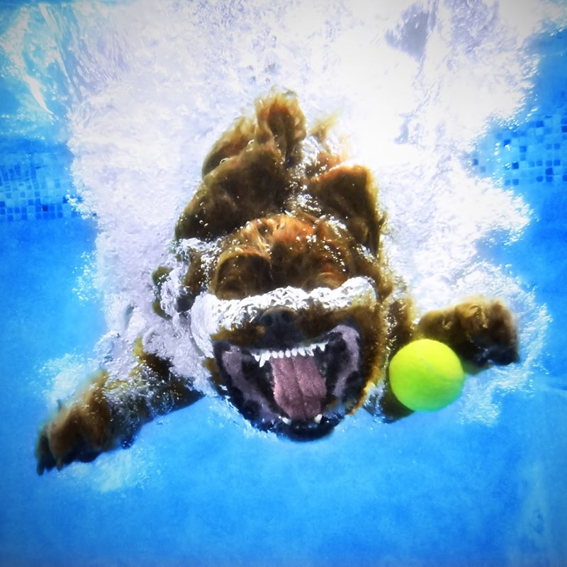 underwater pupper - Water