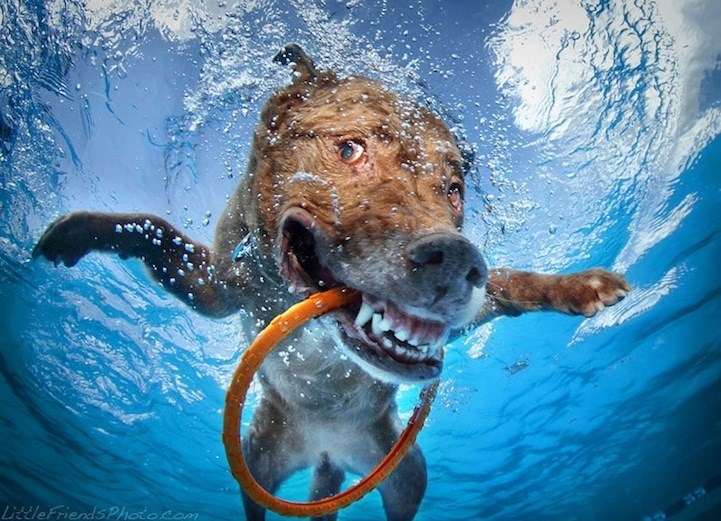 underwater pupper - Water - LttleFriends Photocom
