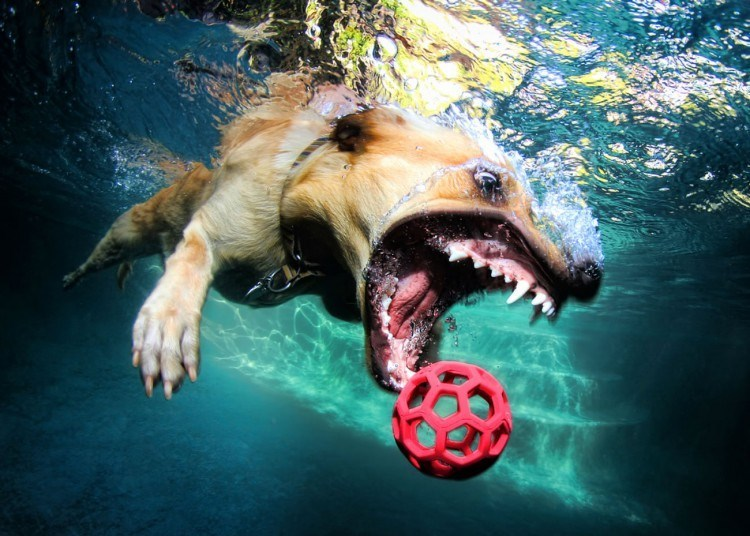 underwater pupper - Organism