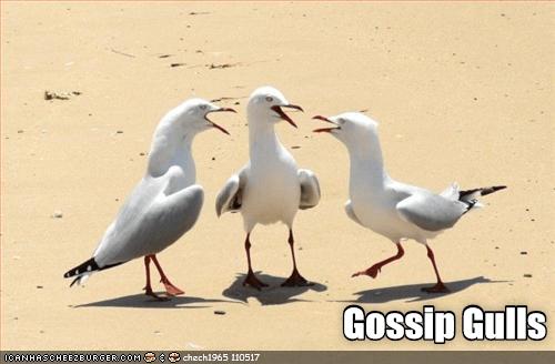 Gossip Gulls | gossip girl pun three seagulls standing together