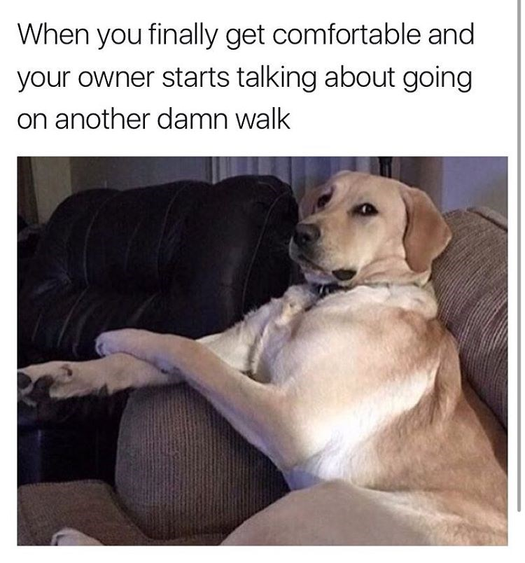 funny dog meme about wanting to go for a walk when comfortable on the couch.