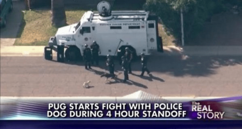 Live TV news headline reads that pug starts fight with police dog during a standoff.