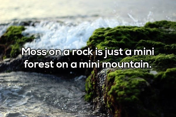 Water resources - Moss ona rock is just a mini forest on a mini mountain.