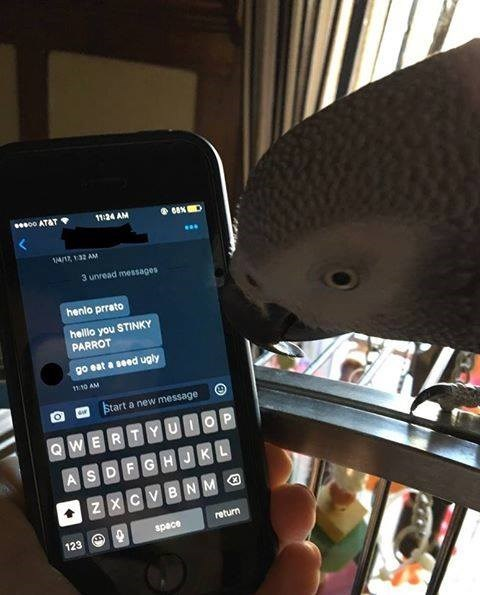 funny bird meme about parrot getting cyberbullies