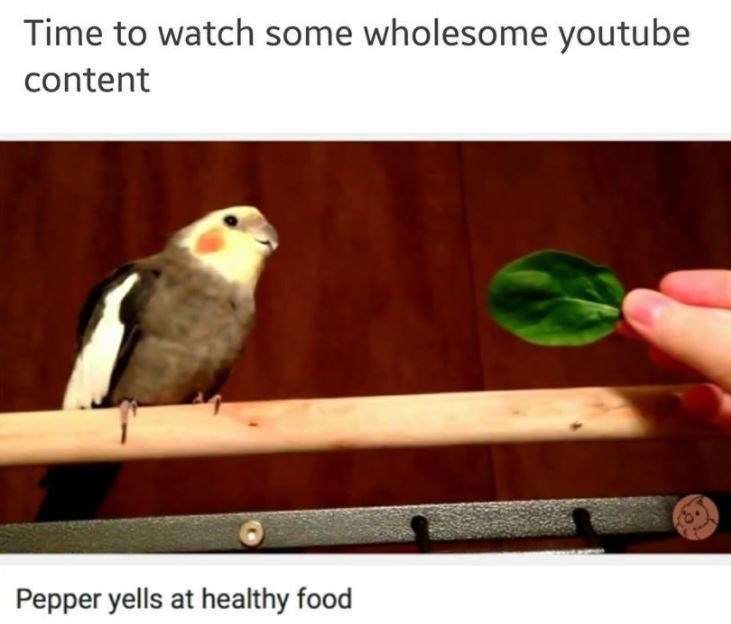 birb meme about bird who gets angry at vegetables