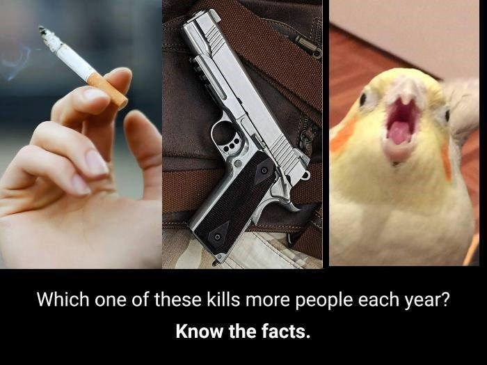 funny bird meme about birds being a leading cause for death