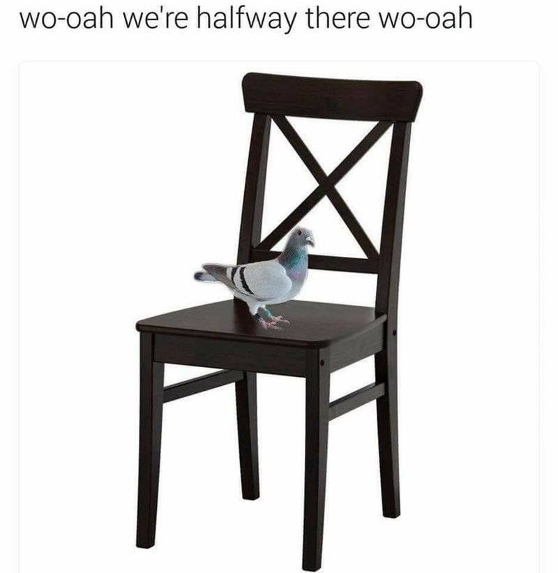 """bird meme about the lyrics of the song """"Living on a Prayer"""" sounding like """"pigeon on a chair"""""""