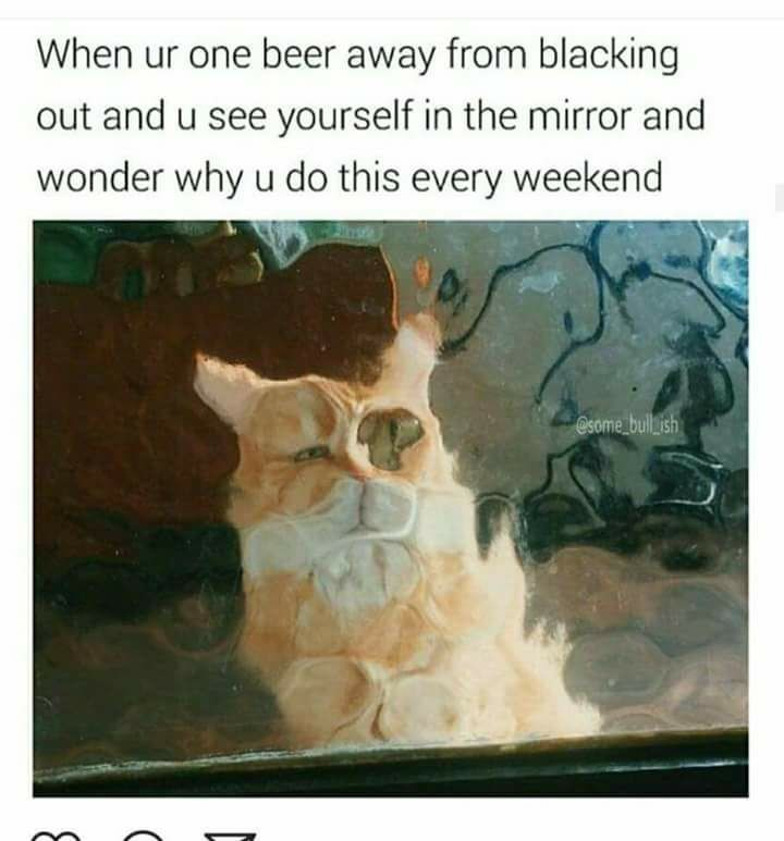 Funyn meme about being on the verge of blacking out on beer with a cat looking crazy.