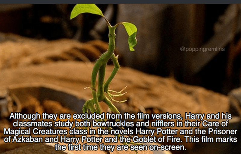 Terrestrial plant - @poppingremlins Although they are excluded from the film versions, Harry and his classmates study both bowtruckles and nifflers in their Care of Magical Creatures class in the novels Harry Potter and the Prisoner of Azkaban and Harry Potter and the Goblet of Fire. This film marks the first time they are seen on-screen.