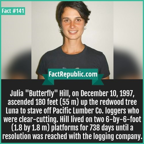 "Text - Fact #141 FactRepublic.com Julia ""Butterfly"" Hill, on December 10, 1997, ascended 180 feet (55 m) up the redwood tree Luna to stave off Pacific Lumber Co. loggers who were clear-cutting. Hill lived on two 6-by-6-foot 