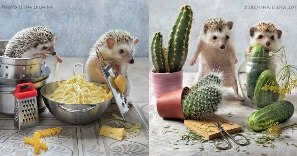 cute scenes with hedgehogs as the subjects