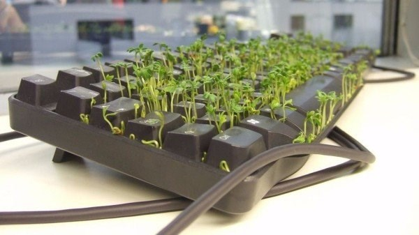 Funny office prank of someone growing something in their computer keyboard.